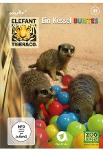 Elefant, Tiger & Co. - Teil 49 - Ein Kessel Buntes  [2 DVDs] DVD-Cover